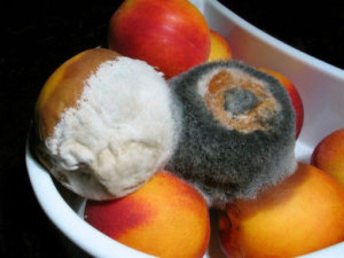 Frutas en mal estado