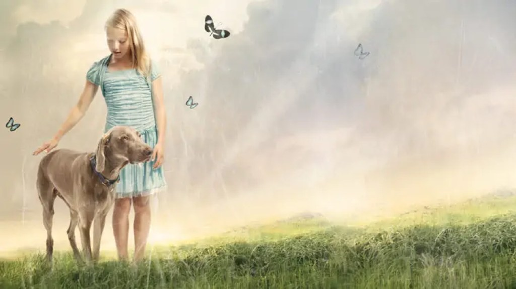 Stylized photo of girl petting large dog outside in a green field with the sun shining behind her