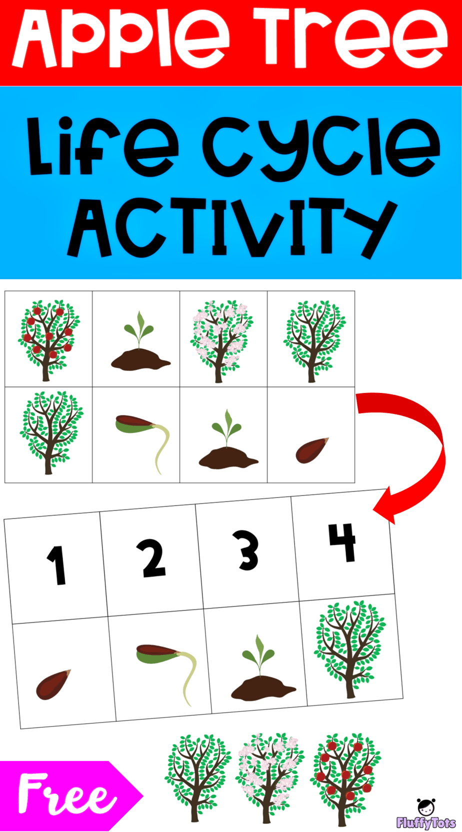 Apple Tree Life Cycle Activity Free 2 Sequencing Printable Fluffytots