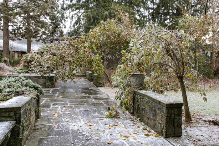 V Botaniceskom sadu tak teperʹ vygladat mnogie derevʹa. Za neskolʹko dnej do etogo on gnulisʹ i lomalisʹ pod tazestʹu snega.