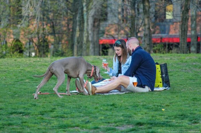 Piknik s piccej i rozovym....