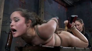 Image: Hogtied pallid brunette Charlotte Vale lies on the wooden old chest