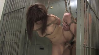 Bound Asian hottie gets fucked with behind the bars image