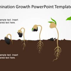 Sunflower Plant Life Cycle Diagram Pourbaix Fe Germination Process Seed To Timeline - Slidemodel