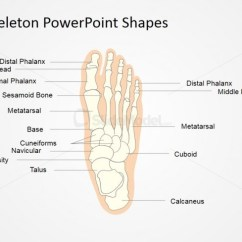 Kids Skeletal System Diagram Taylor Dunn B248 Wiring Presentation Of For Foot Slidemodel Skeleton Pictures Using Powerpoint