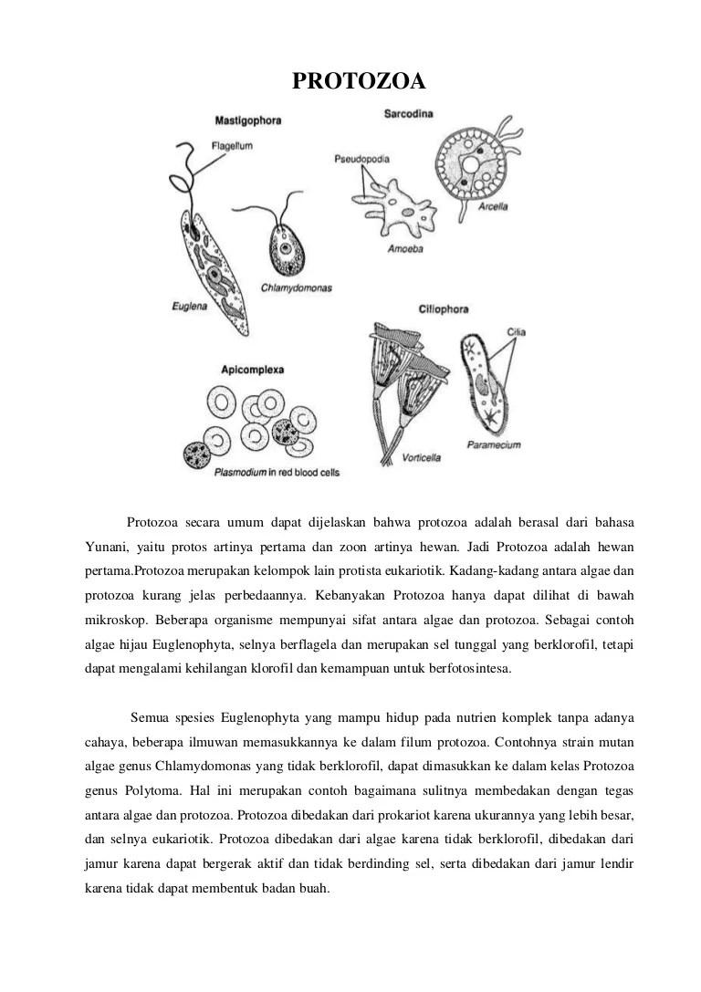 Peranan Protozoa Bagi Kehidupan : peranan, protozoa, kehidupan, Protozoa