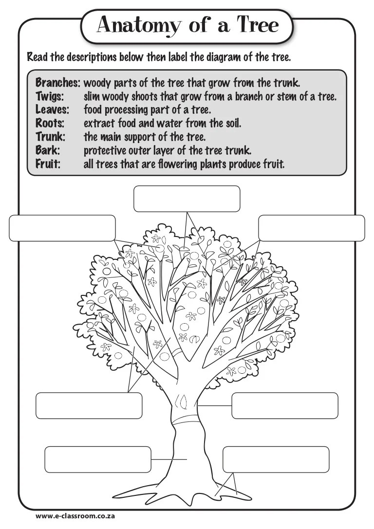 hight resolution of root tree trunk diagram