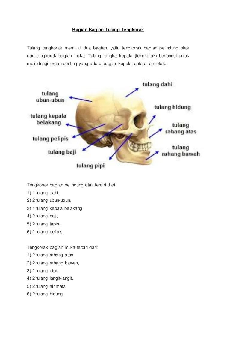 Gambar Tulang Baji : gambar, tulang, Bagian, Tulang, Tengkorak