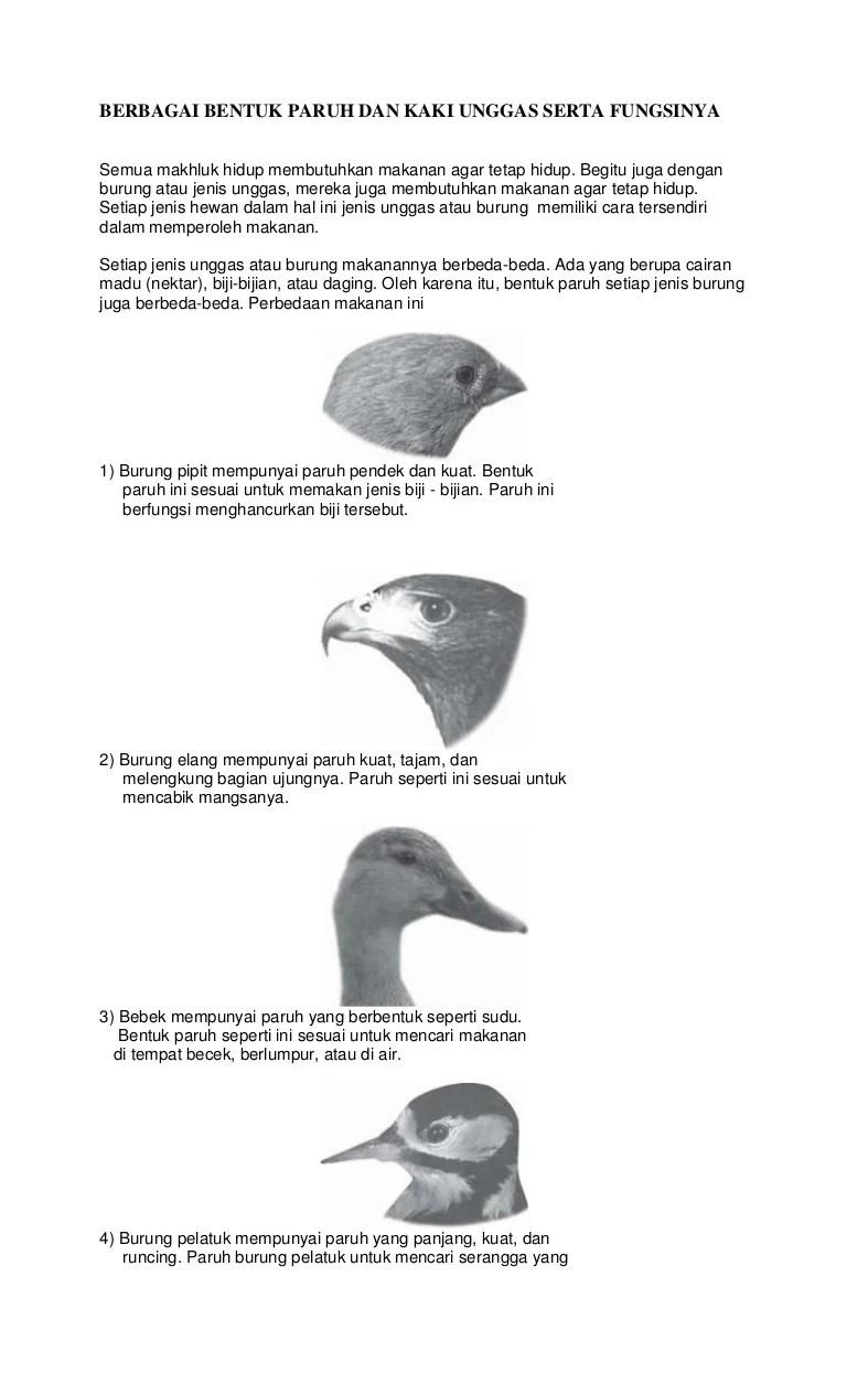 Makanan Burung Pipit : makanan, burung, pipit, Berbagai, Bentuk, Paruh, Unggas, Serta, Fungsinya