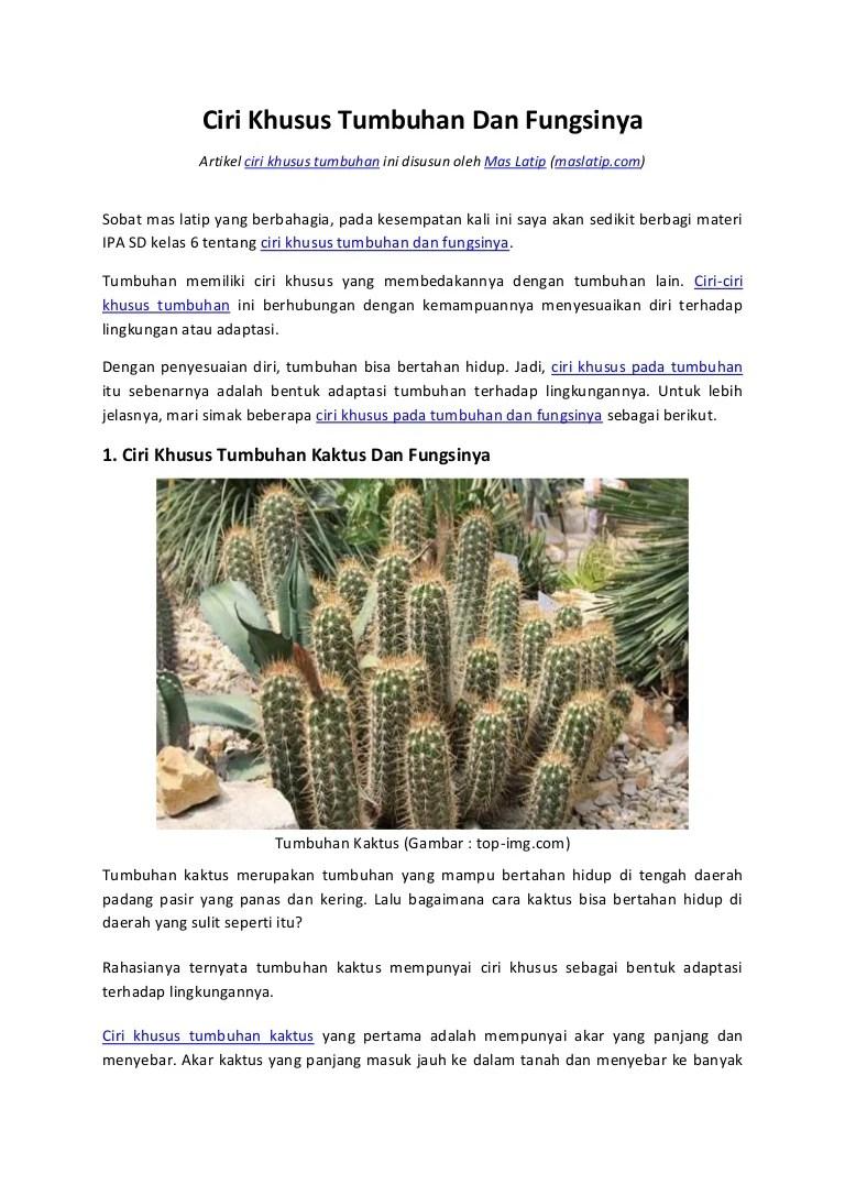 Ciri Khusus Dari Kaktus