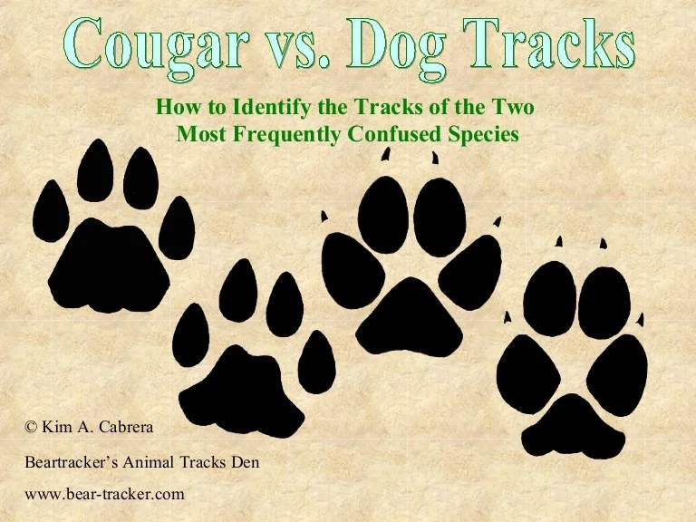 Cat Track Dog Track Vs