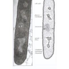 Eukaryotic Plant Cell Diagram Lennox Heat Pump Wiring Ib Biology Draw Assessment Statements