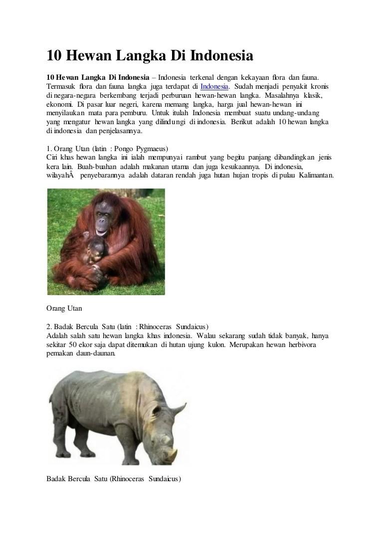 Badak Bercula Satu Berasal Dari : badak, bercula, berasal, Flora, Fauna, Indonesia