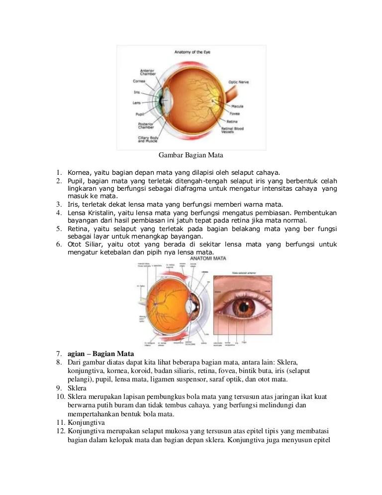 Gambar Mata Dan Fungsinya : gambar, fungsinya, Gambar, Bagian