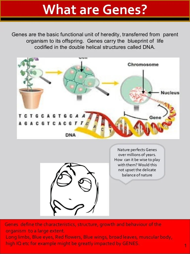 small resolution of diagram of how gmo are made