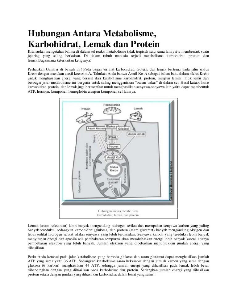 Keterkaitan Metabolisme Karbohidrat Lemak Dan Protein : keterkaitan, metabolisme, karbohidrat, lemak, protein, Hubungan, Antara, Metabolisme