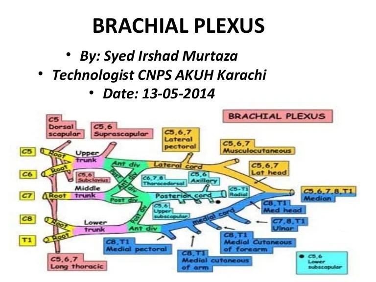Anatomy Of Brachial Plexus By Murtaza Syed Akuh Karachi