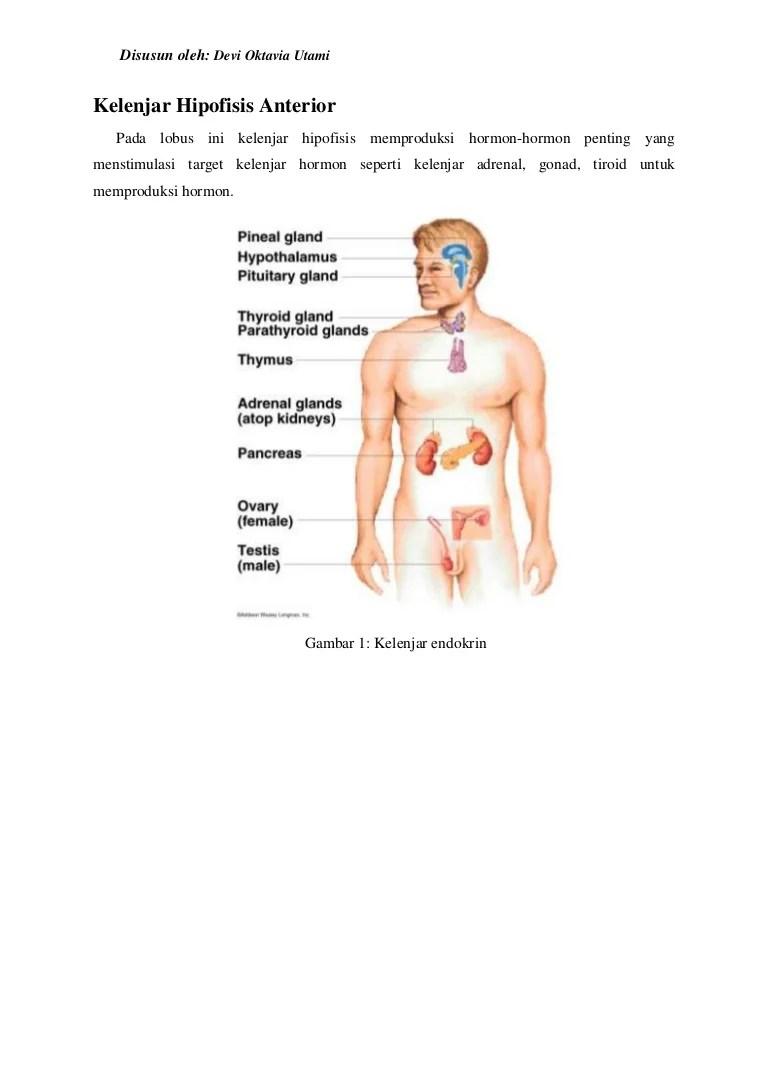 Kelenjar Hormon : kelenjar, hormon, Kelenjar, Hipofisis, Anterior