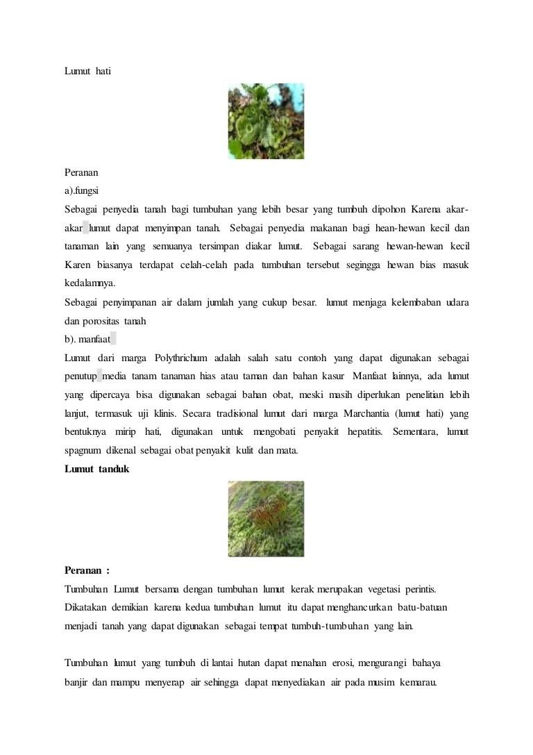 Manfaat Tumbuhan Lumut : manfaat, tumbuhan, lumut, Lumut