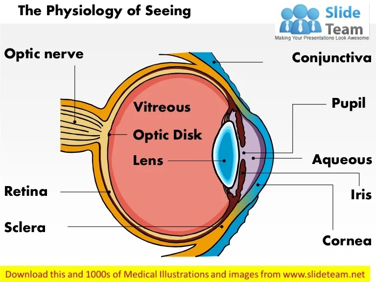 Physiology of seeing eye anatomy medical images for power ...