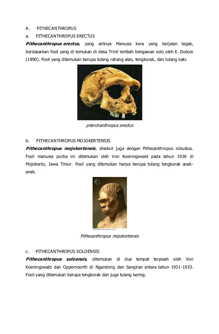 Ciri-ciri Pithecanthropus Erectus : ciri-ciri, pithecanthropus, erectus, Pithecanthropus
