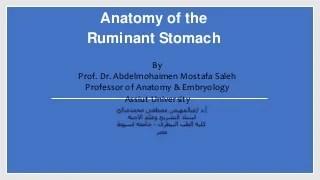 'ruminant digestive system' on SlideShare