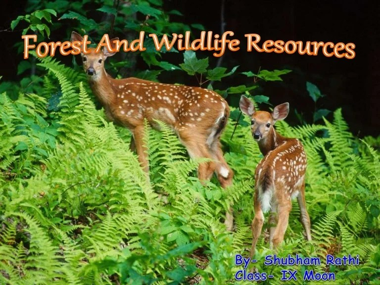 Rbse cbse 10th forest and wildlife resources # 1 is a part of the series of social science notes. Forest And Wildlife