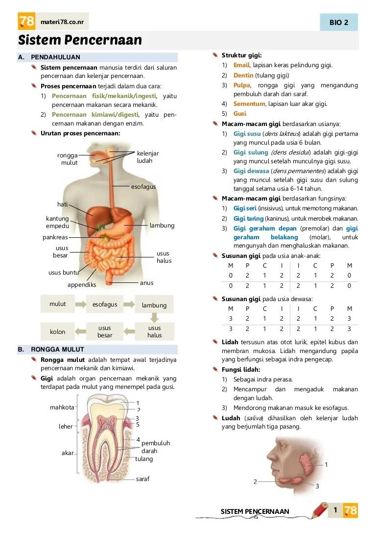 Pencernaan Kimiawi Dan Mekanik : pencernaan, kimiawi, mekanik, MATERI, Sistem, Pencernaan, KELAS