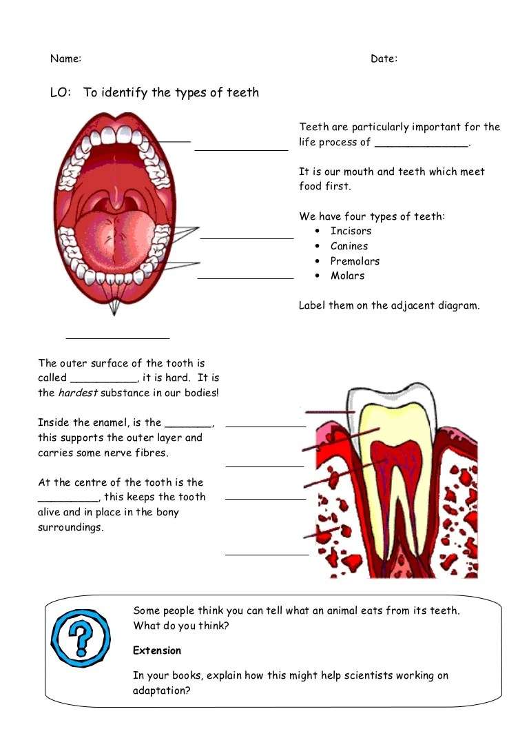 hight resolution of tooth diagram name