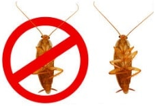 homemade roach killer featured image