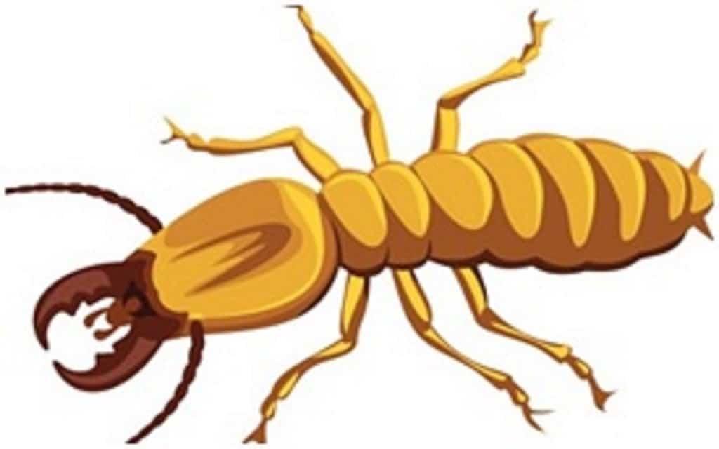 swarming termites featured image