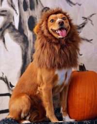 21 dogs who already have better Halloween costumes than ...