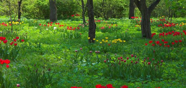 موضوع تعبير عن الربيع للصف الخامس سطور
