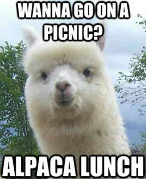 Funny Llama Pics : funny, llama, Funny, Llama, Memes, Don't, Drama