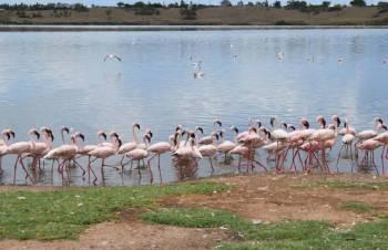 Migrating birds make little known lake a tourism spot