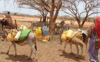 Villagers cry for help as drought escalates
