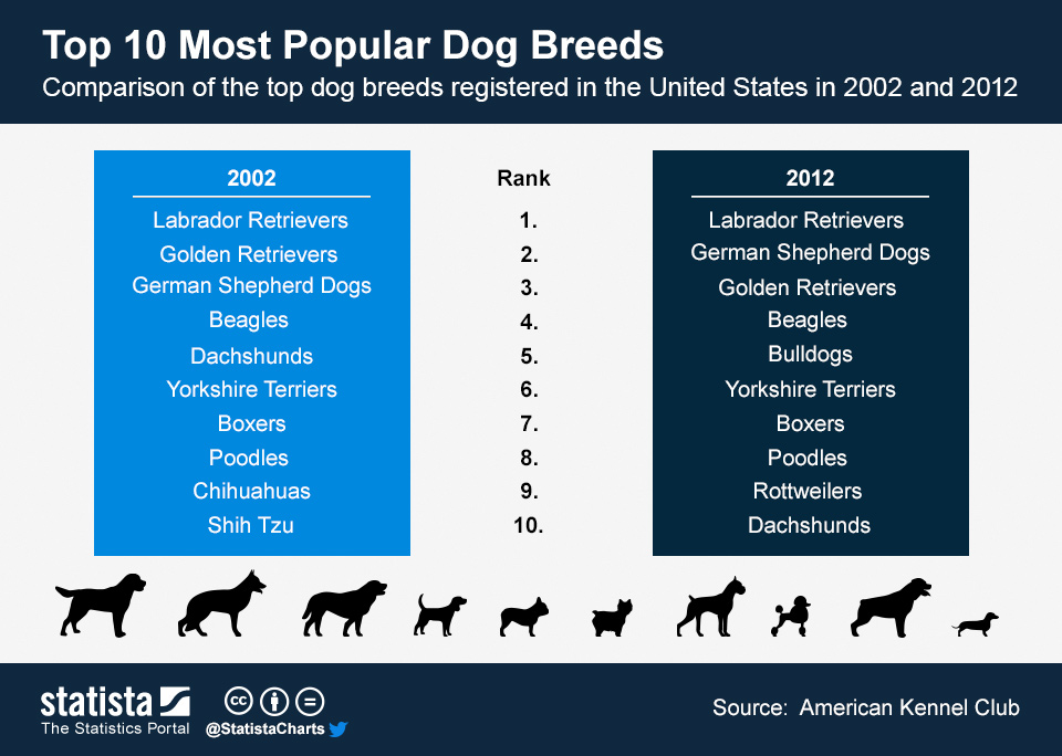 Chart Top 10 Most Popular Dog Breeds Statista
