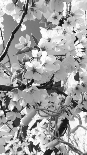 Grey Tumblr Wallpaper : tumblr, wallpaper, Black, Floral, Wallpaper, Tumblr