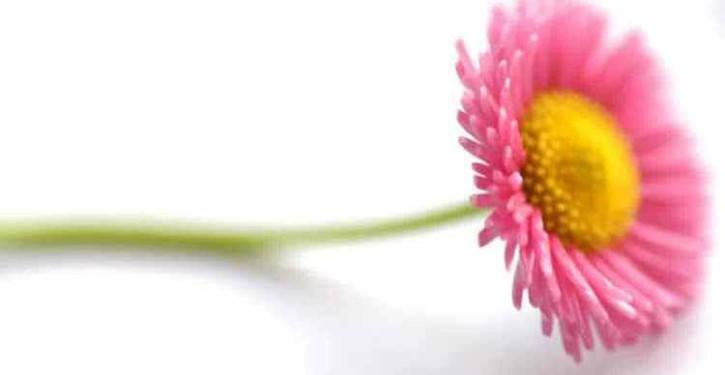 sekuntum-bunga-cantik