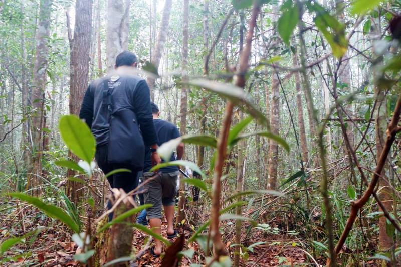 Kembali menembus hutan belantara demi bertemu dengan Orang Utan di Taman Nasional Sebangau