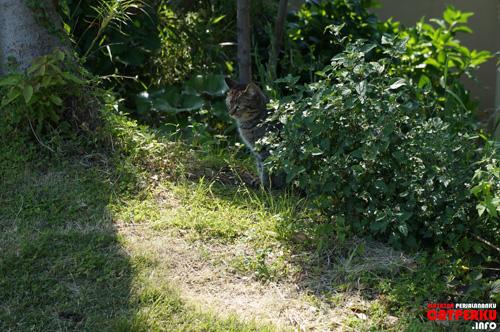 Ah! Saya menemukan si hitam sedang bersembunyi di semak - semak :)