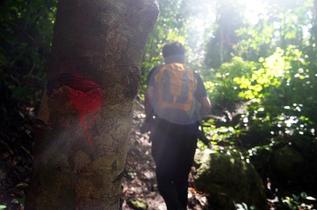 Ikuti cat berwarna sepeti yang ada di pohon ini, pasti akan nemu si Air Terjun Perpas.