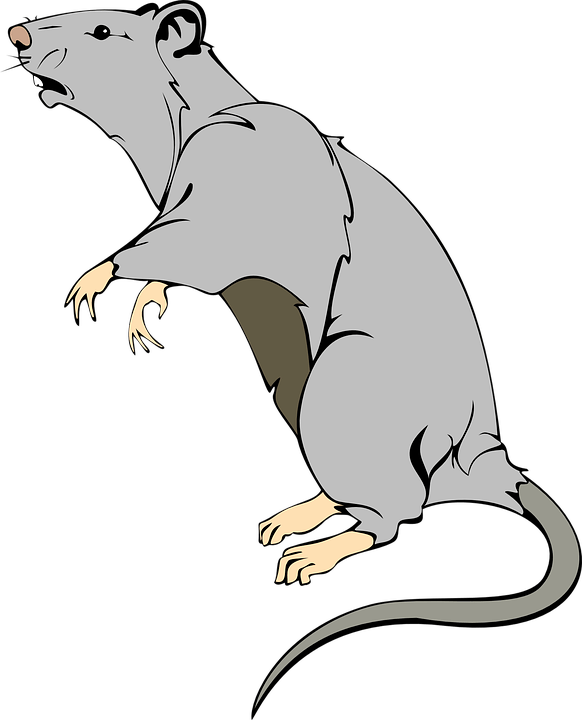 Contoh Gambar Tikus Kartun