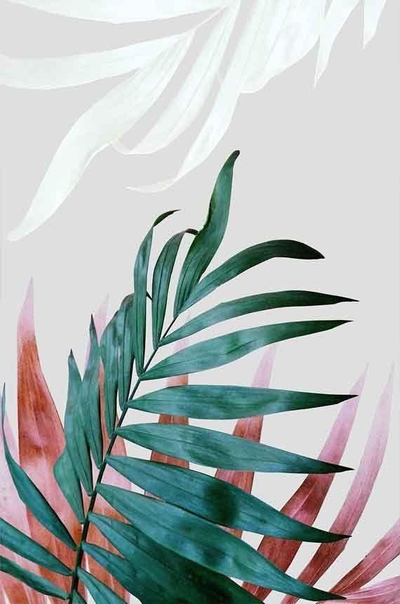 Tropical Leaves Iphone Wallpaper : tropical, leaves, iphone, wallpaper, Pastel, Tropical, Leaves, Iphone, Wallpaper