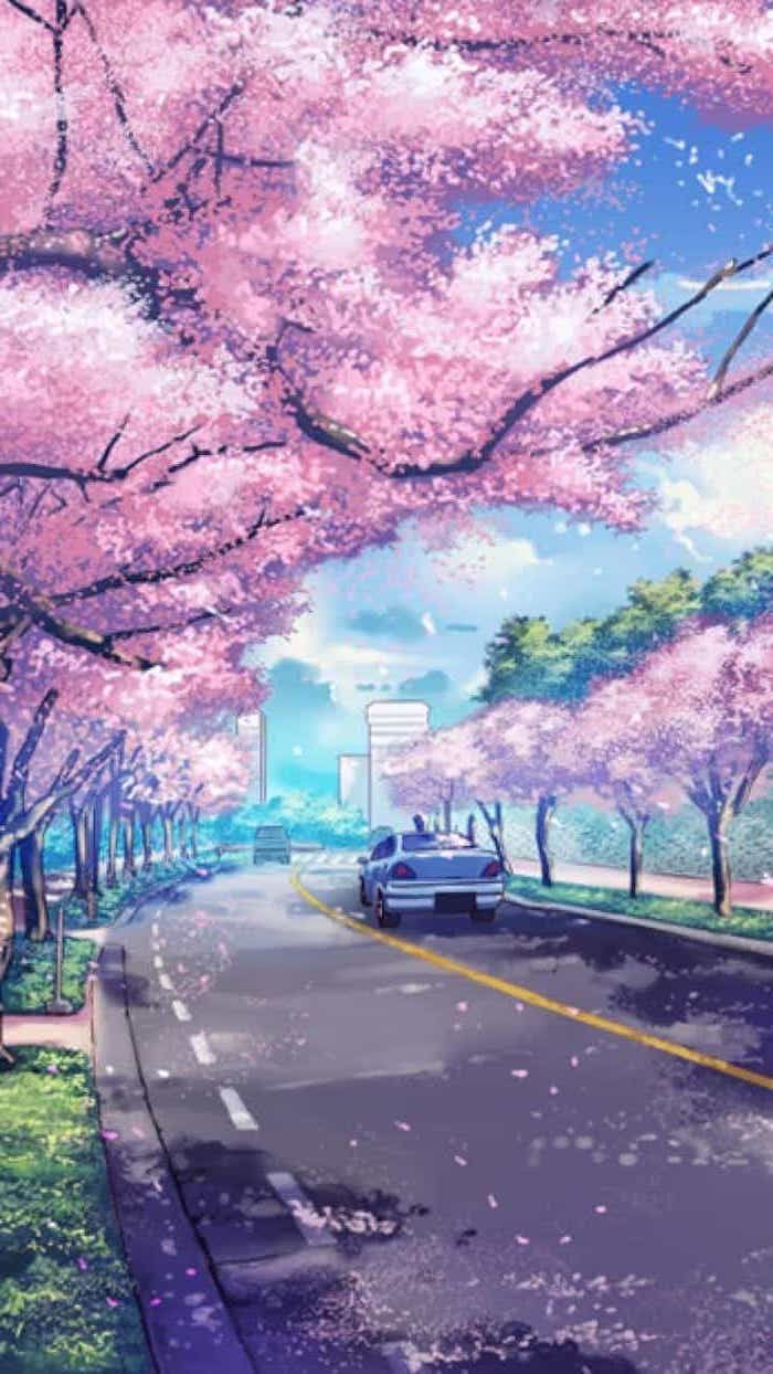 Anime Sakura Wallpaper Android