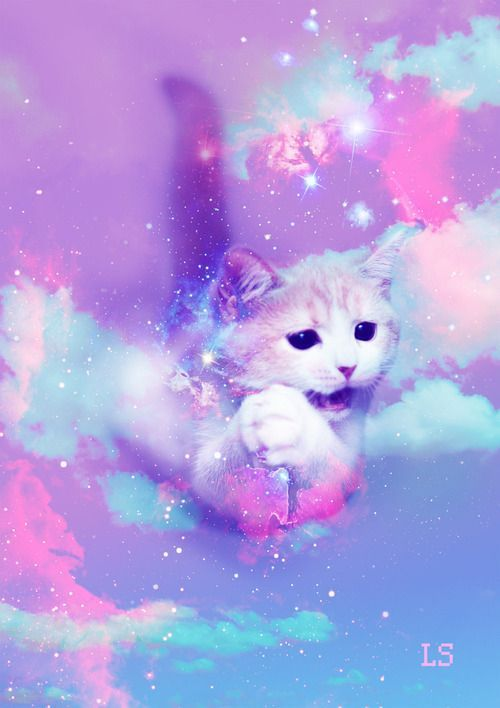 Galaxy Cat Background : galaxy, background, Galaxy, Wallpaper