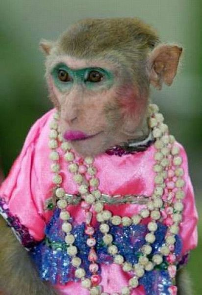 Funny Monkey Pictures Images : funny, monkey, pictures, images, Funny, Monkey, Images