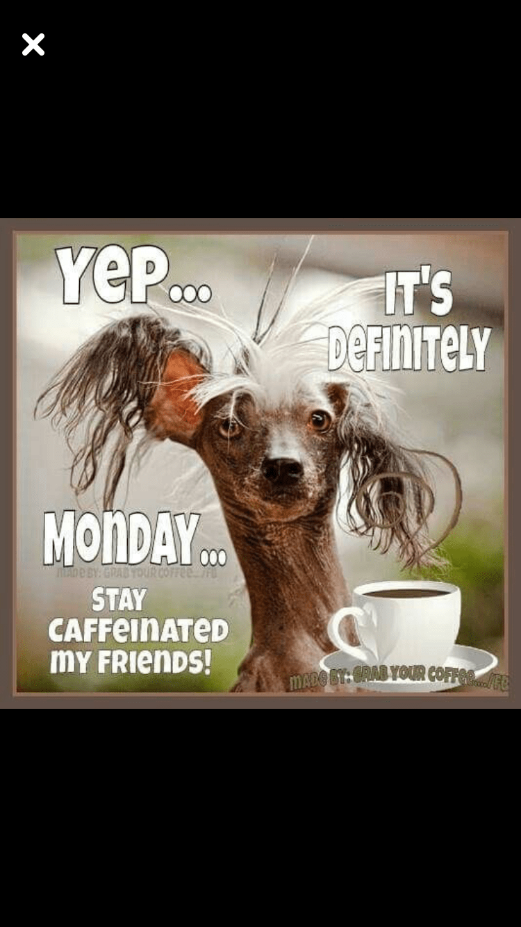 Coffee Meme Wednesday : coffee, wednesday, Humor, Coffee, Memes, Wednesday