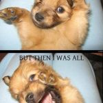 Supe Cute Funny Cute Dog Pictures