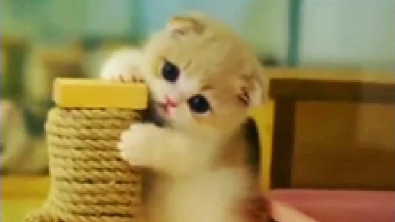 Ynpp wa · kuda, kucing bayi, serigala, bayi hewan, gambar hewan lucu, john lennon. 36 Foto Profil Wa Meme Kucing